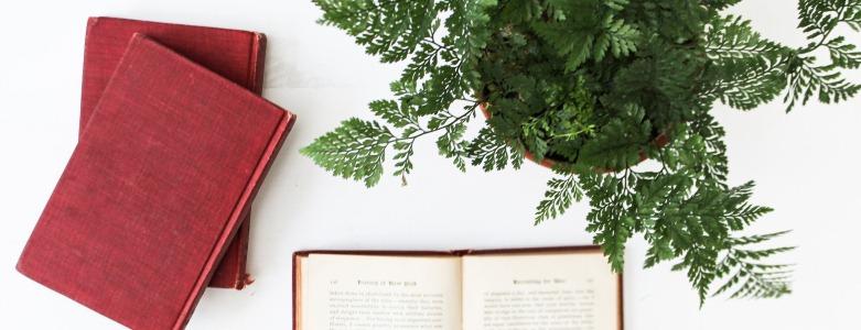 5 redenen voor echte planten op kantoor - GuashaTherapeut